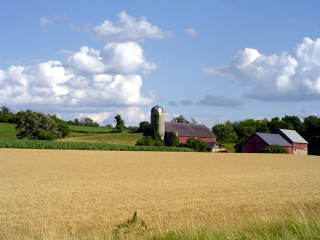 Wheat and barns